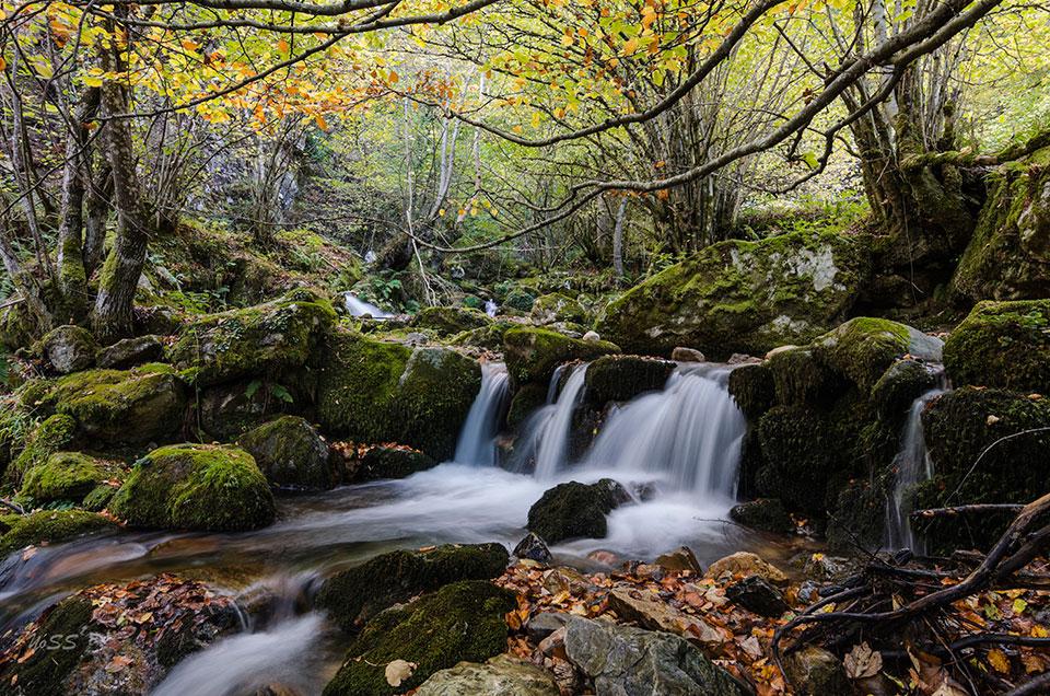 Bosque de Gumial; el hayedo mágico